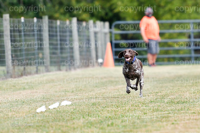 fast (457 of 1695)