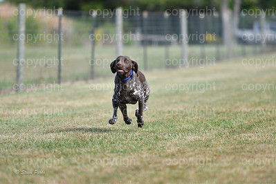 fast (369 of 1695)
