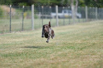 fast (368 of 1695)