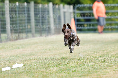 fast (460 of 1695)