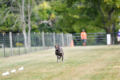 fast (464 of 1695)