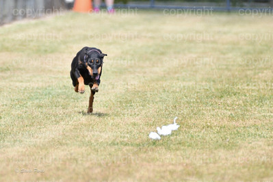 fast (1628 of 1695)