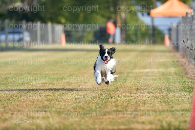 fast (46 of 1695)