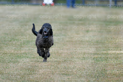 fast (1534 of 1695)