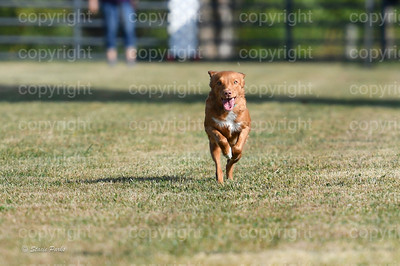 fast (278 of 1695)