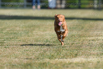 fast (280 of 1695)
