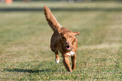 fast (288 of 1695)