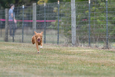 fast (648 of 1695)
