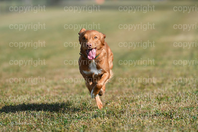 fast (293 of 1695)
