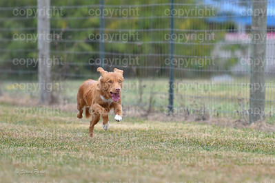 fast (656 of 1695)