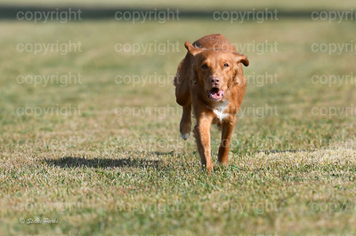 fast (284 of 1695)
