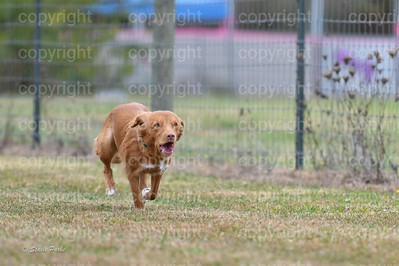 fast (658 of 1695)