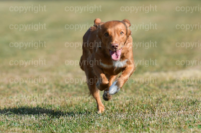 fast (287 of 1695)