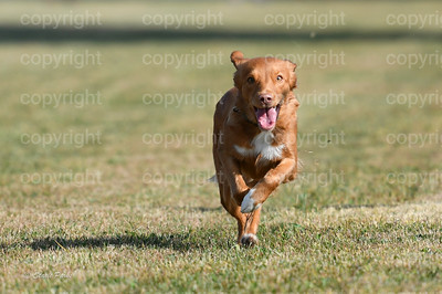 fast (285 of 1695)