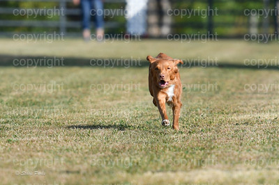 fast (279 of 1695)