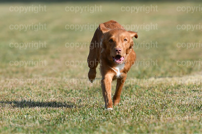fast (286 of 1695)