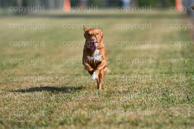 fast (291 of 1695)