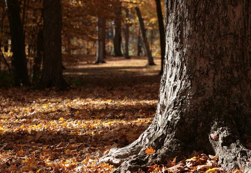 Fall at Shoaff Park.