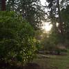 Sunny Rhody Garden