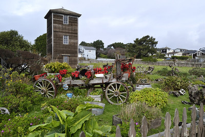 And a classic Mendocino Christmas yard.