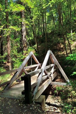 Cute bridge at Montgomery Woods State Reserve.