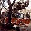FLFD Truck 1 vs tree