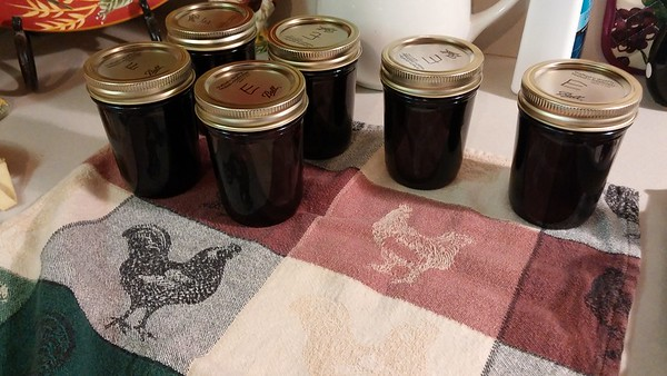 "Elderberry jelly canned and cooling - waiting to hear the ""pop"" of the lids to know they're vacuum sealed."