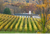 Acclaimed Barboursville Winery in Central Virginia.