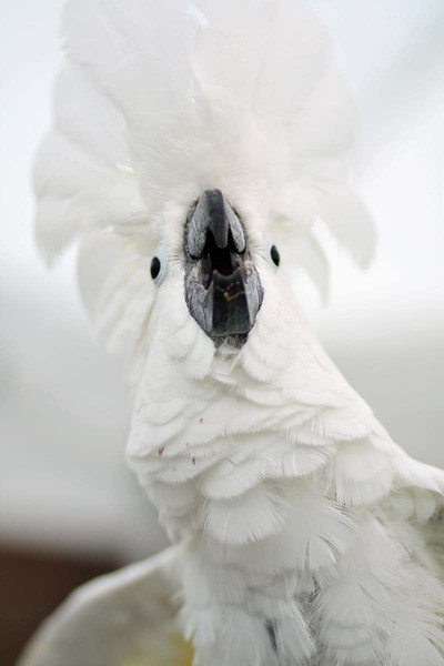 annalisepetphoto bird IMG_7372