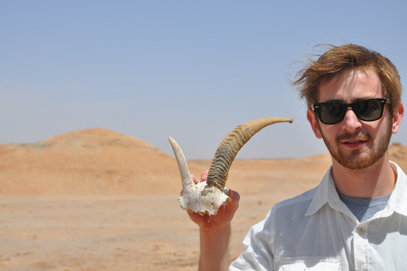 While out prospecting, Jack found the skull roof of a goat.  But not Pleasant Goat.  I like this specimen because you can see the nature of horns: they have a bony core covered by a longer, growing sheath made of...well, horn!  This is what differentiates horns from antlers.