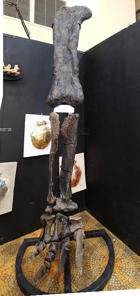 Dino leg,over 6ft tall.