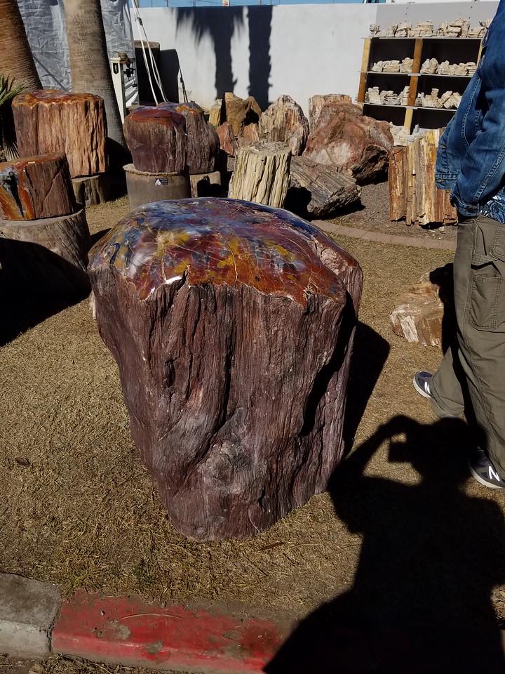 Petrifiied wood....and Mark.