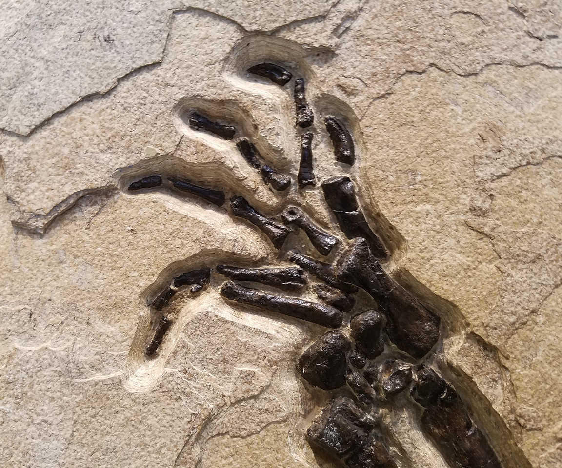 "Croc's  ""hand""."