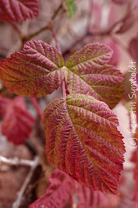 Autumn red by Kerstin