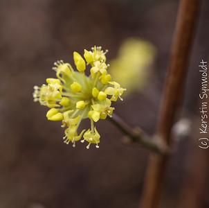 First blooming by Kerstin