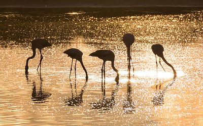 Fenicotteri all'alba - Saline di Stintino