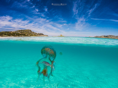 Immersi nella acque della spiaggia de La Pelosa