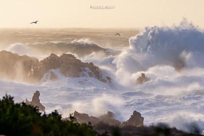 Mareggiata di Maestrale - Sardegna