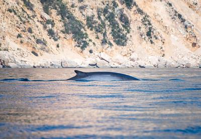 Balenottere - Costa di Baunei