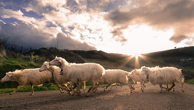 Strade di Sardegna