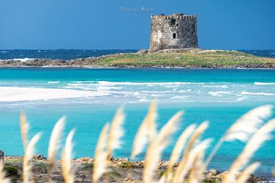 Torre - Spiaggia La Pelosa - Stintino