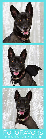 lilly photo strip