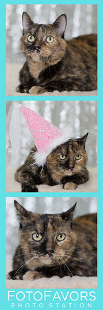 princess sprinkles photo strip