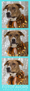 lacey photo strip