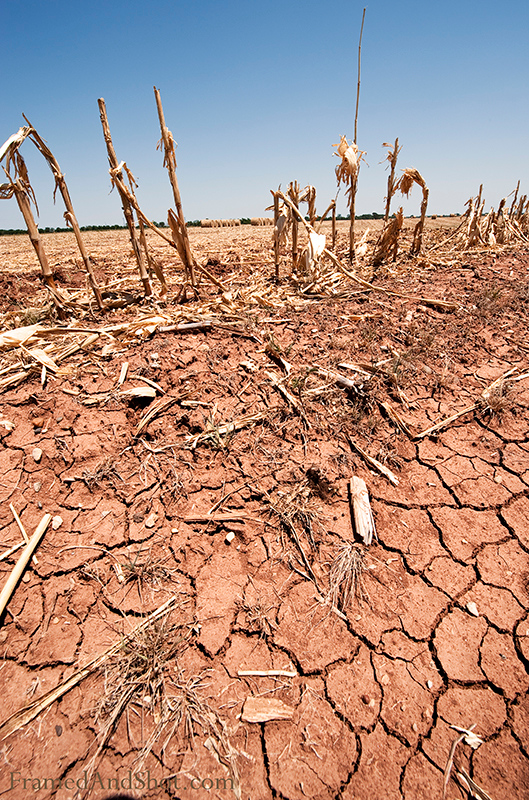 "<h4>Scorched Earth<br> It has been a very dry summer in our part of Texas. Thankfully not as dry as the summer of 1980 when President Jimmy Carter came to show his concern. The President said the Government was trying to do everything it could, and added  ""We'll be praying for rain and cooler weather in the future."""