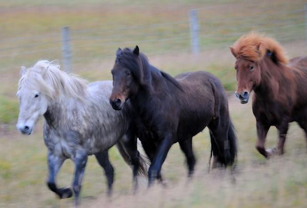 Island / Iceland - september 2011