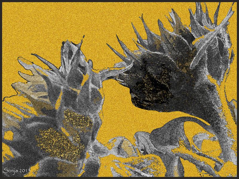 Zonnebloemen / Fotobewerking met Photoshop CS5 Extended