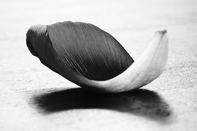 Blad van tulp #2