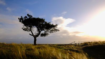 Soltairy tree on Terschelling