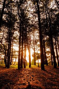 Forrest sunset | Zonsondergang in het bos [#027]]